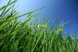 weeds3